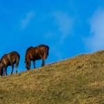 遊牧民とデスクワーク